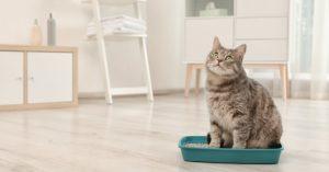 Choisir un modèle de bac à litière pour chat