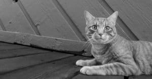 10 conseils pour réduire le niveau de stress de votre chat