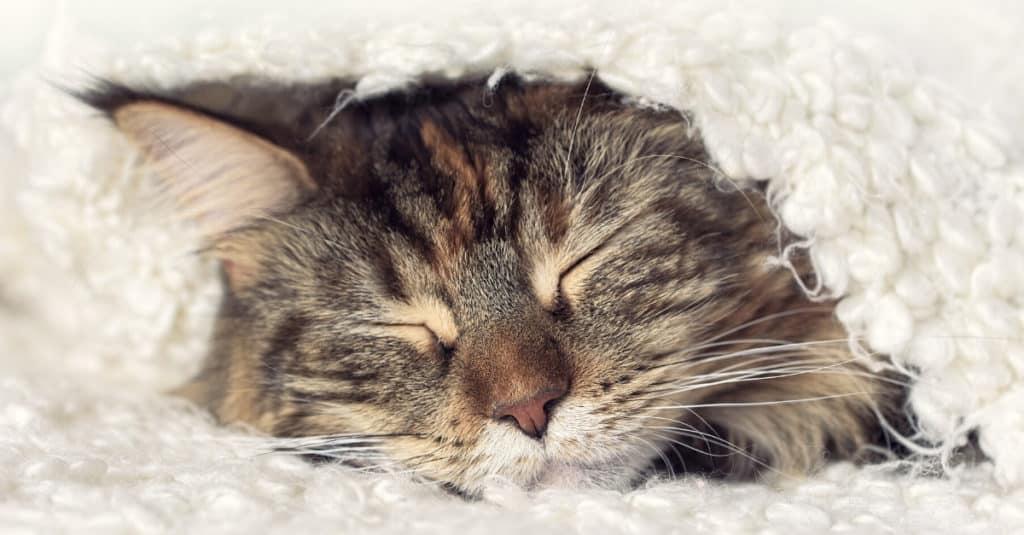 le sommeil du chat