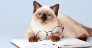 5 choses sur les chats