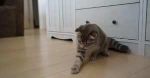 Pourquoi les chats aiment-ils les jouets laser