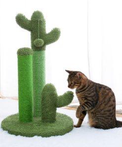 Arbre à chat cactus